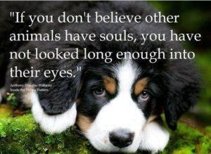 Animal souls