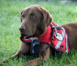 service-dog v2